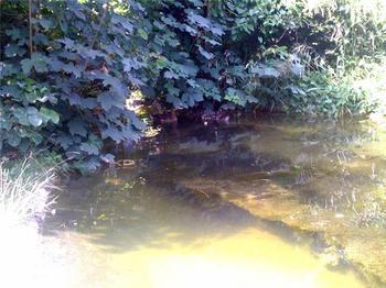 池&鴨.jpg